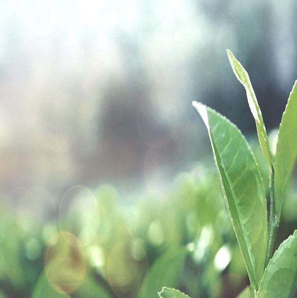 MYLOCKER og bæredygtighed